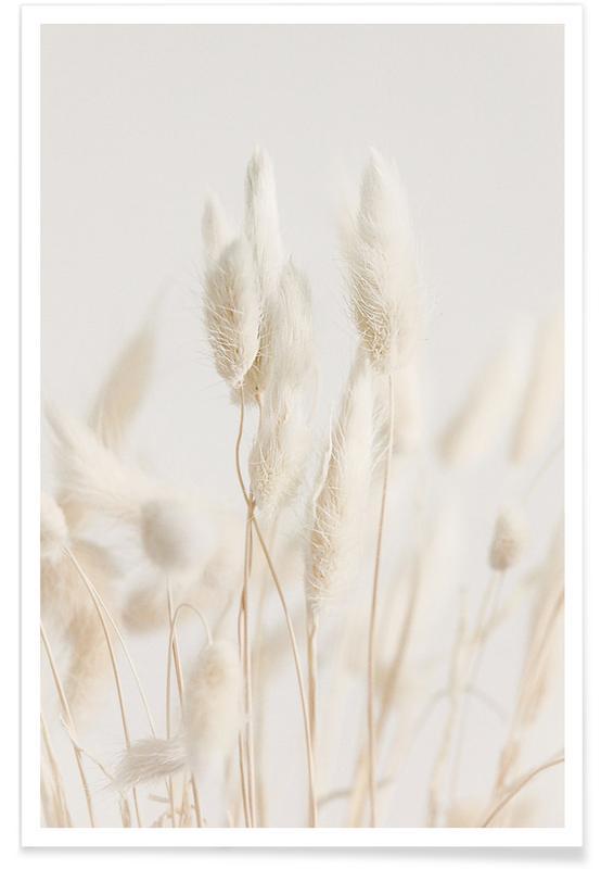 , Dried Flowers Lagurus 2 Plakat