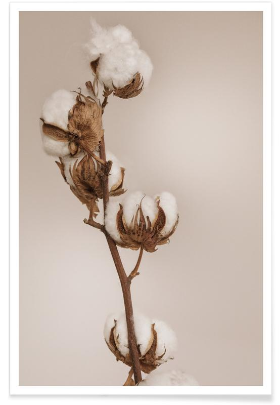 , Cotton Flower Poster