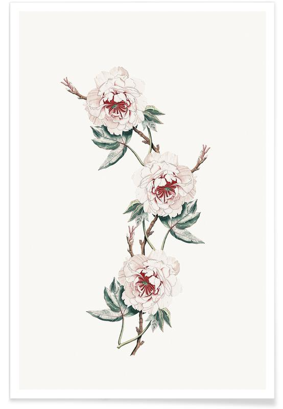 Japanese Inspired, Japanese Flower Peony Pale Poster