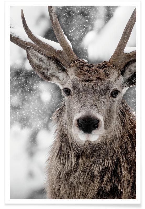 Hirsche, Winter Stag -Poster