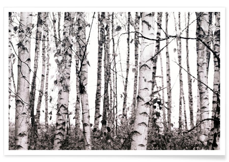 Arbres, Winter Birches affiche