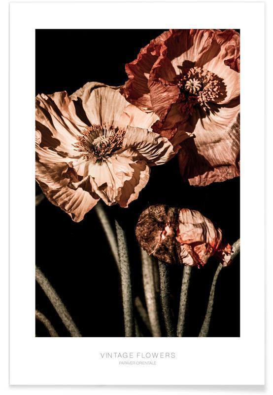 , Vintage Flowers Papaver affiche