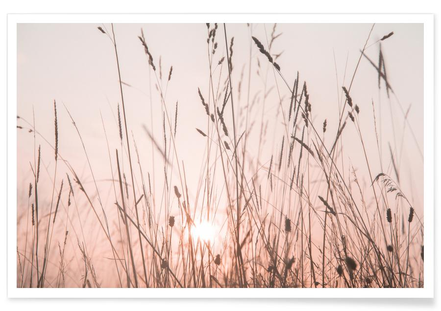 , Sunrise Grass affiche