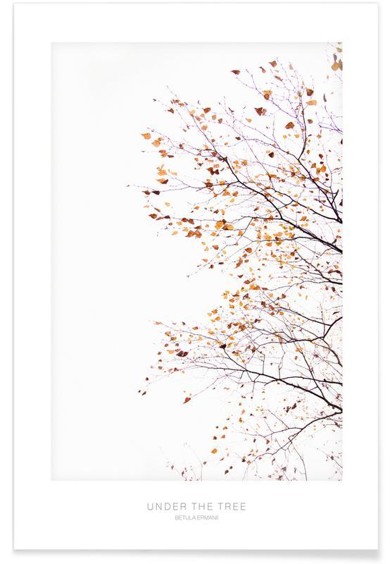 Bäume, Under the Tree Betula Ermannii 2 -Poster
