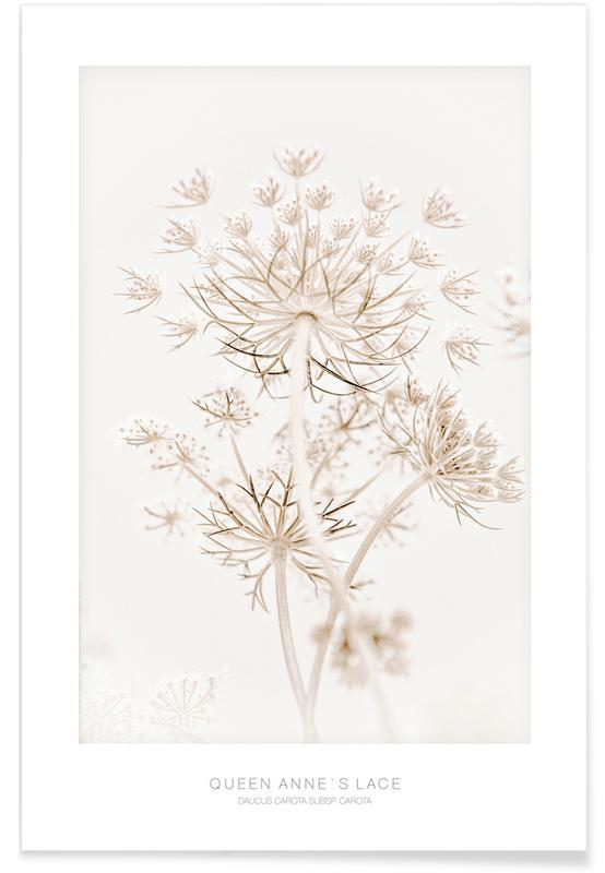 , Queen Annes Lace 1 Poster
