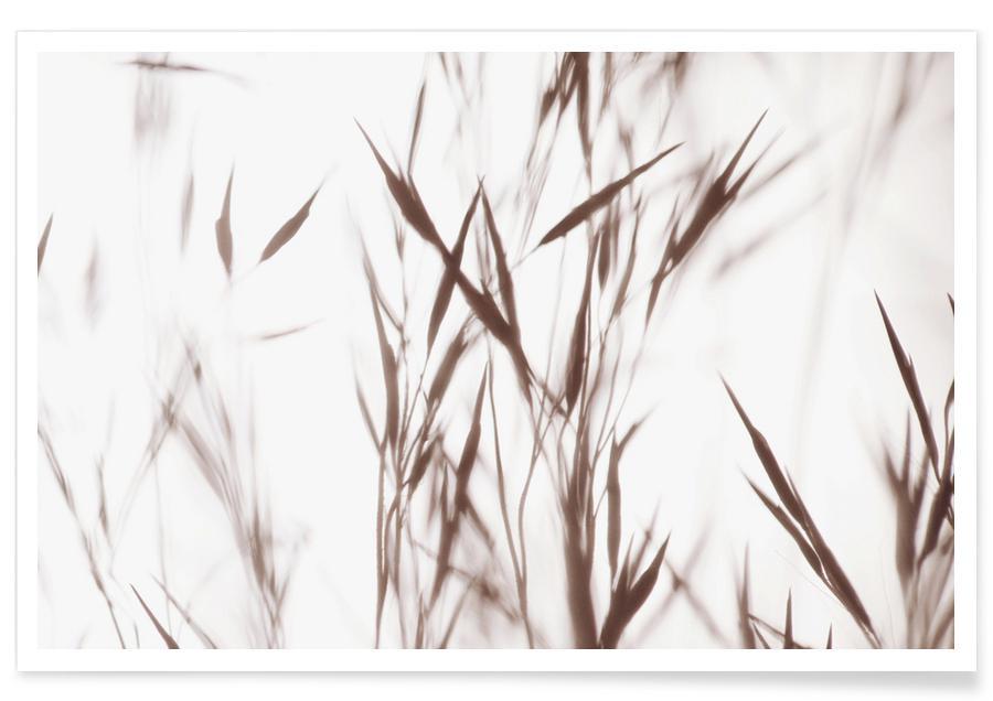 Bladeren en planten, Elegant Grass poster