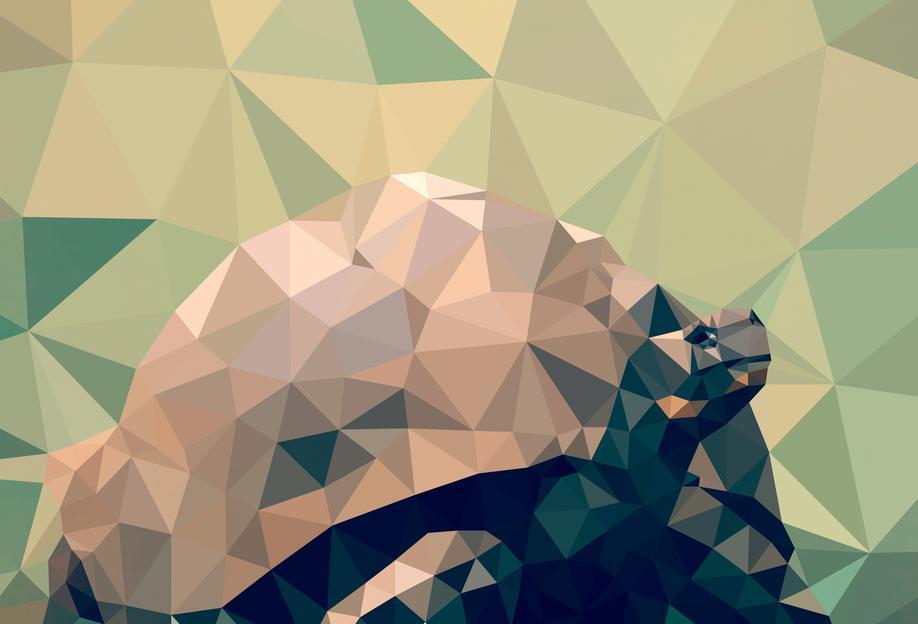 Geochelone nigra -Acrylglasbild