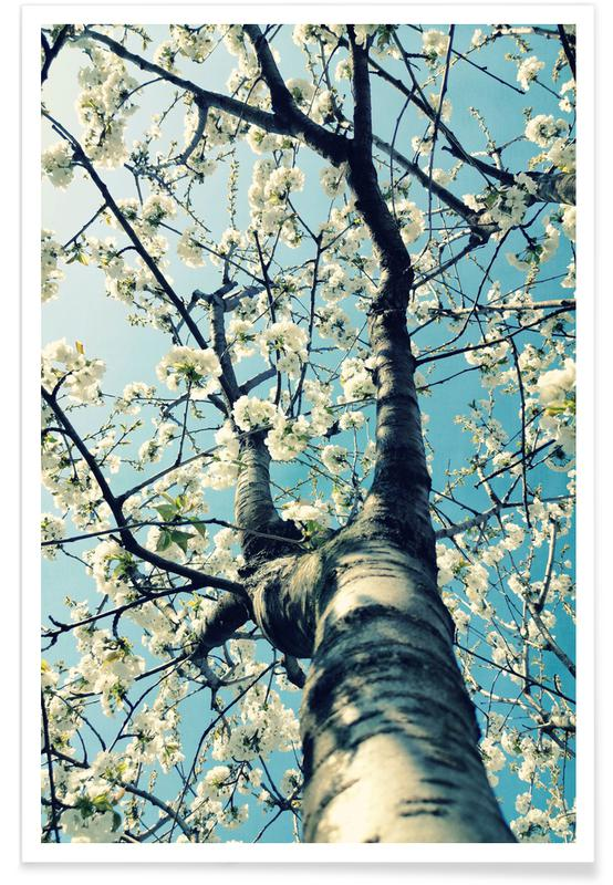 , Under The Cherry Tree Poster