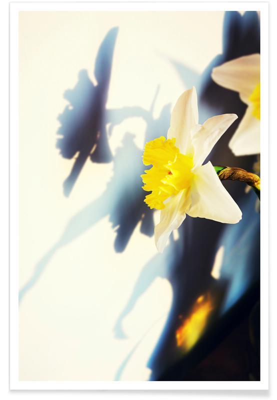 , Daffodil Poster