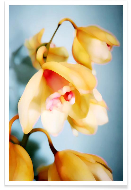 , Orchids 14 poster