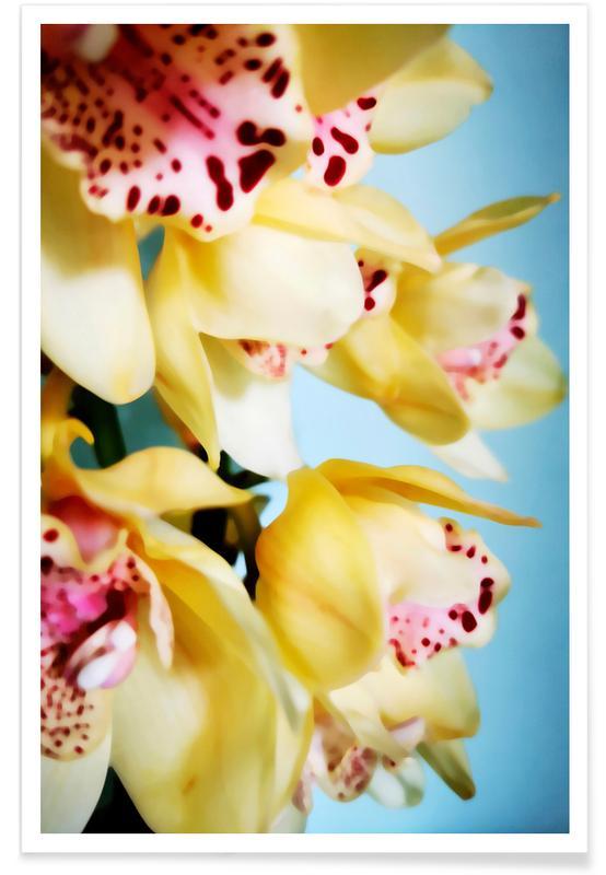 , Orchids 9 affiche