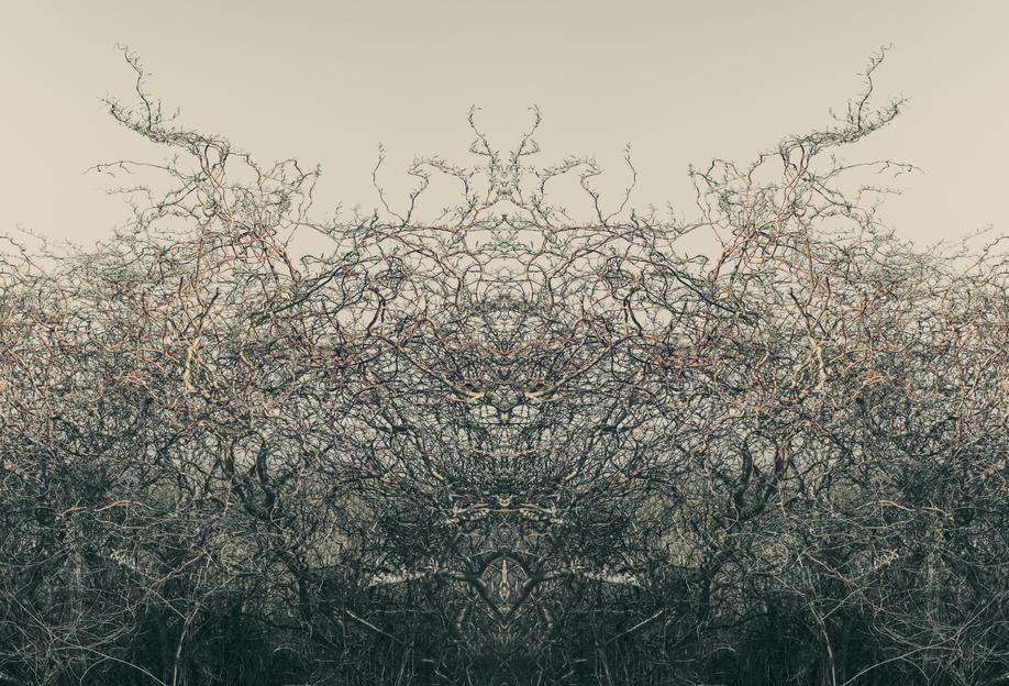 Nature´s soul Aluminium Print