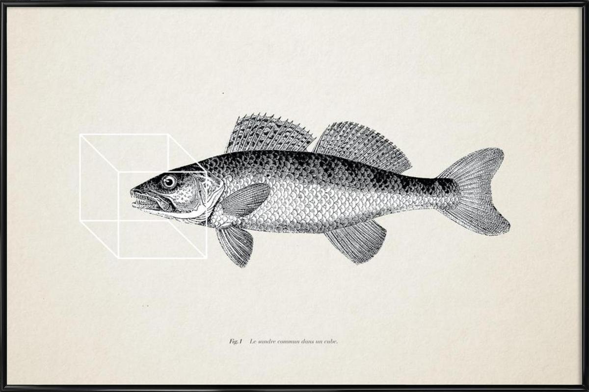 Fish#1 Framed Poster