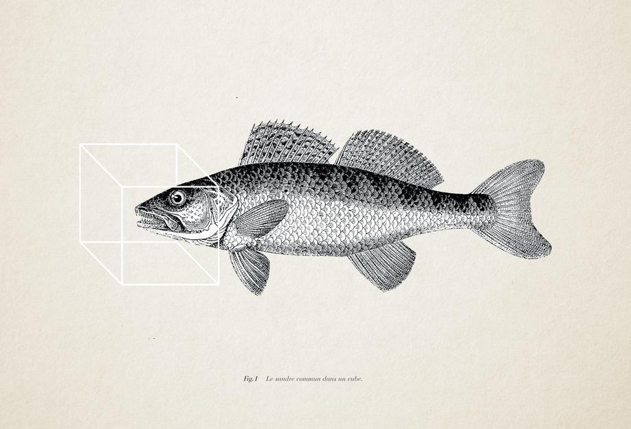 Fish#1 Aluminium Print
