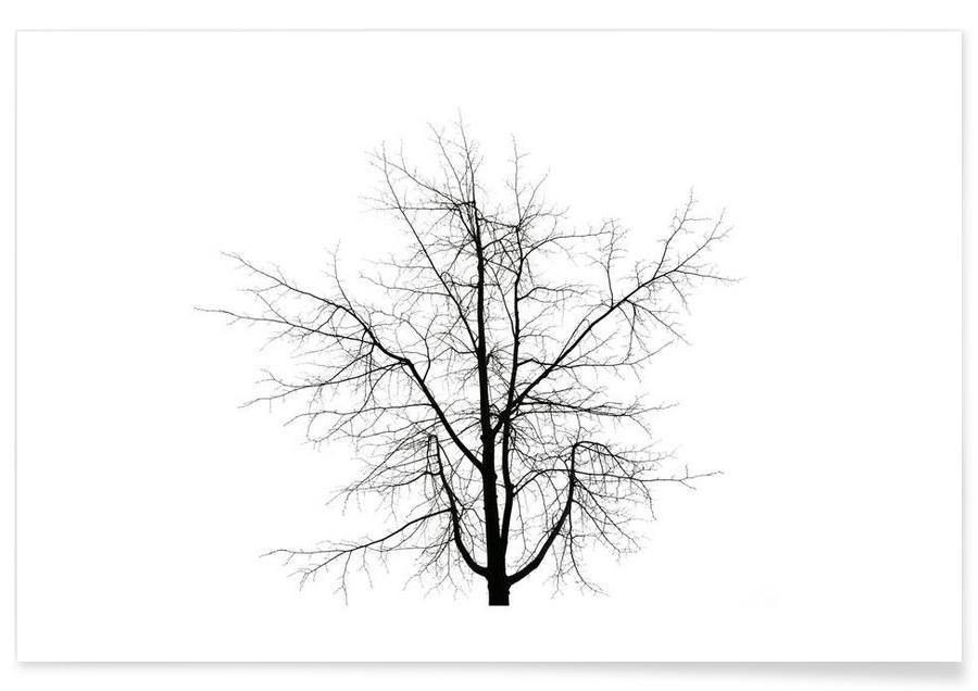 Noir & blanc, Arbres, DJJU15_0009 affiche
