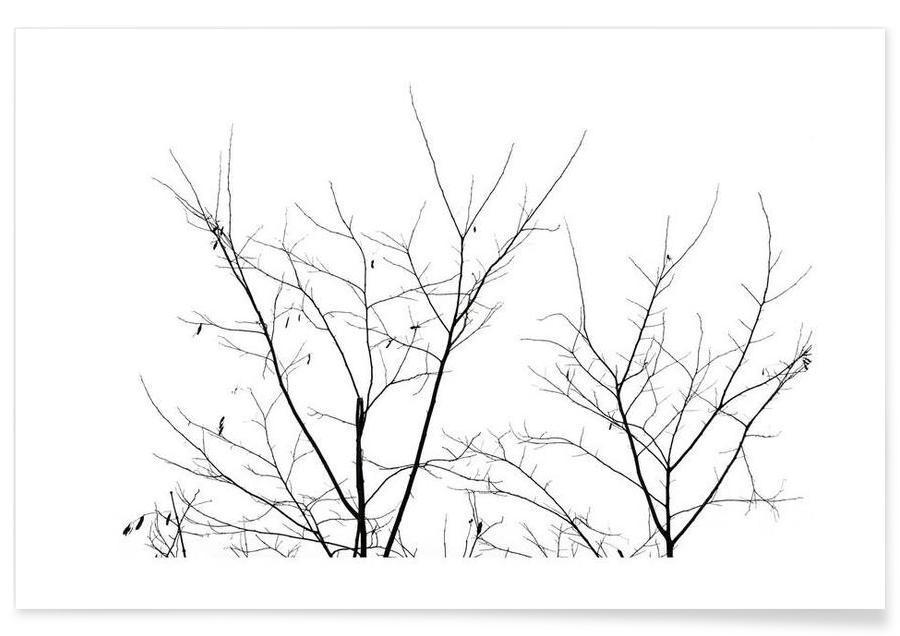 Noir & blanc, Arbres, DJJU15_0010 affiche