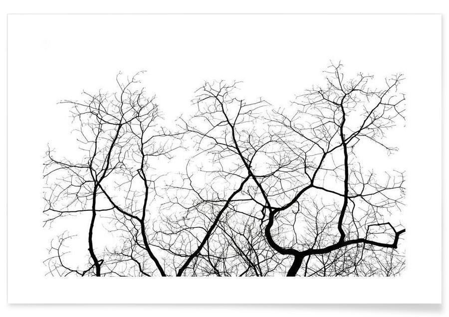 Noir & blanc, Arbres, DJJU15_0011 affiche
