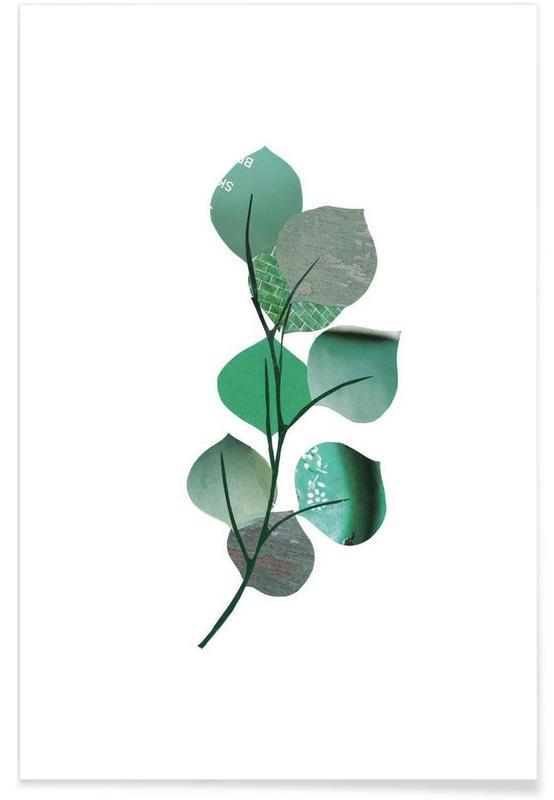 Feuilles & Plantes, Eukalyptus affiche