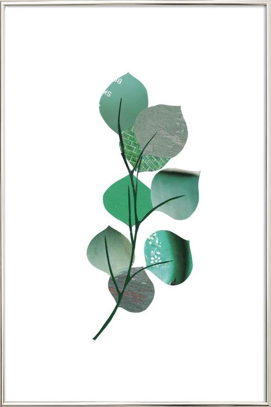 Eukalyptus Poster in Aluminium Frame