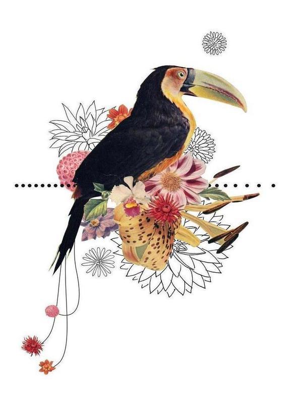 Toucan canvas doek