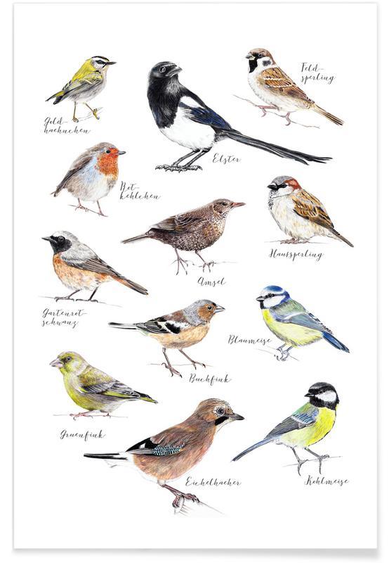 Art pour enfants, Illustrations d'oiseaux affiche