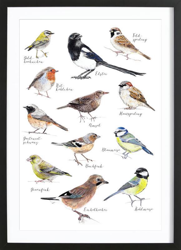 Plakat Vögel Poster i träram
