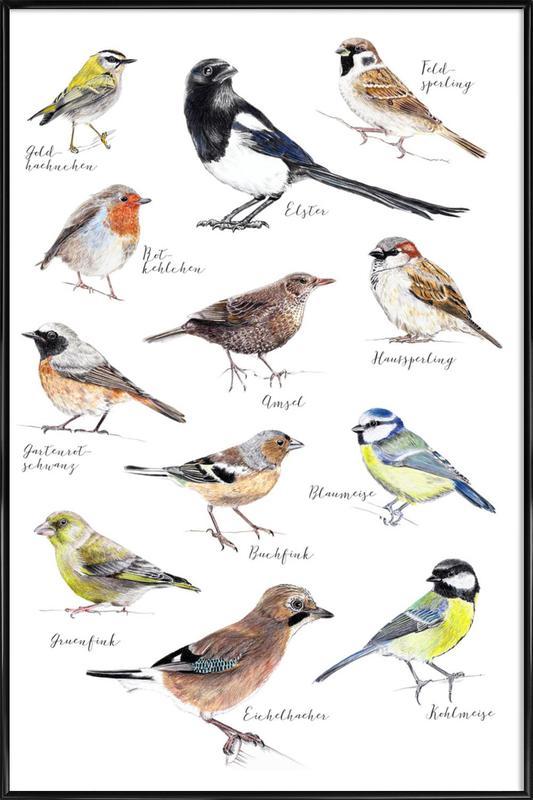 Plakat Vögel affiche encadrée
