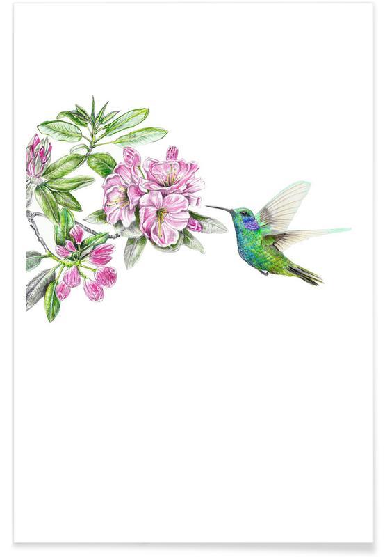 Hummingbirds, Kolibri Poster
