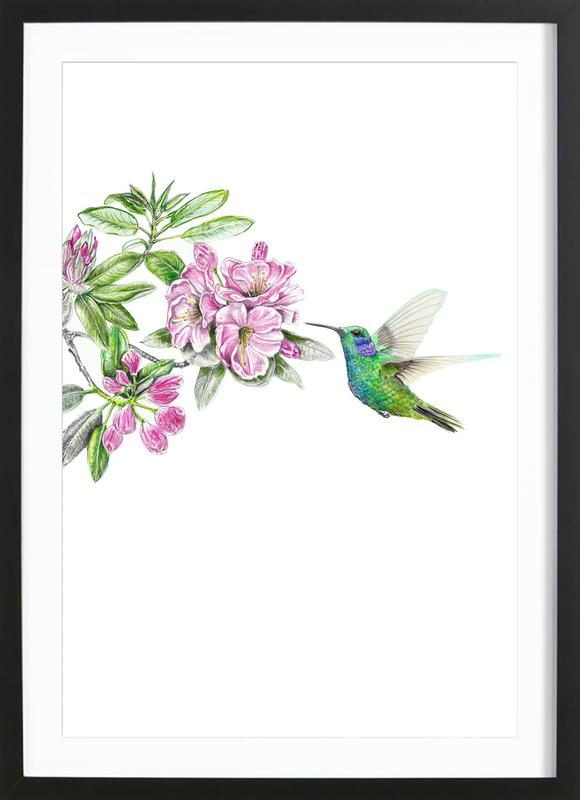 Kolibri Framed Print