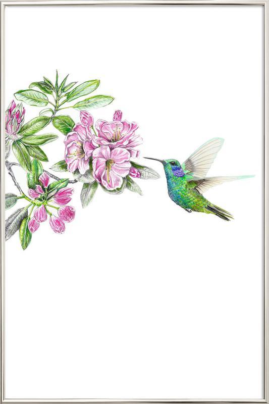 Kolibri Poster in Aluminium Frame