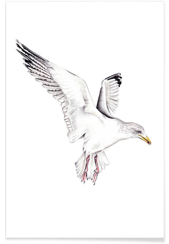 Seagulls, Eismöwe Poster