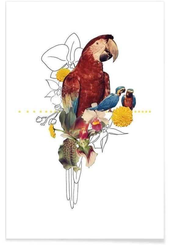 Perroquets, Parrot affiche