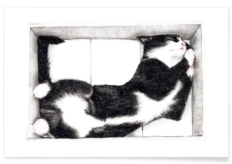 Katze im Karton Poster