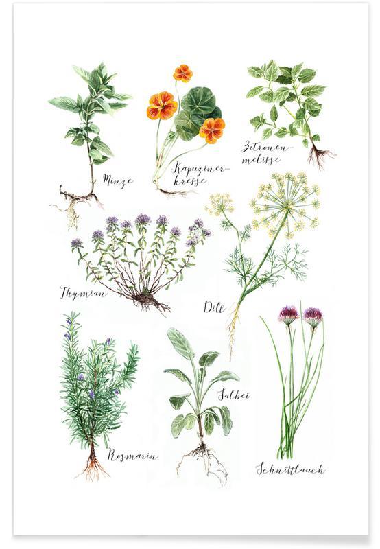 Feuilles & Plantes, Herbes de cuisine affiche
