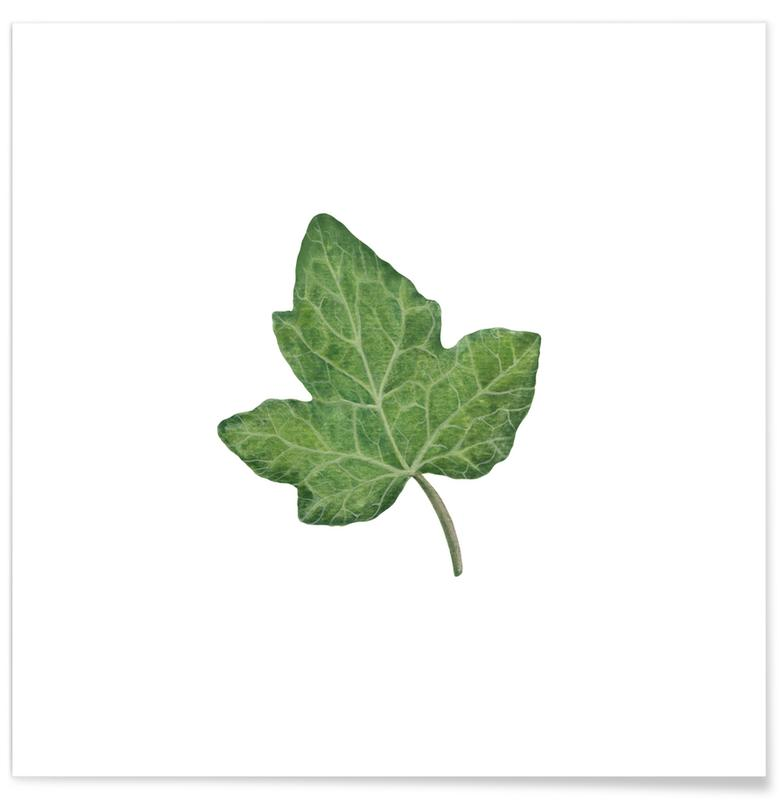 Bladeren en planten, Ivy poster