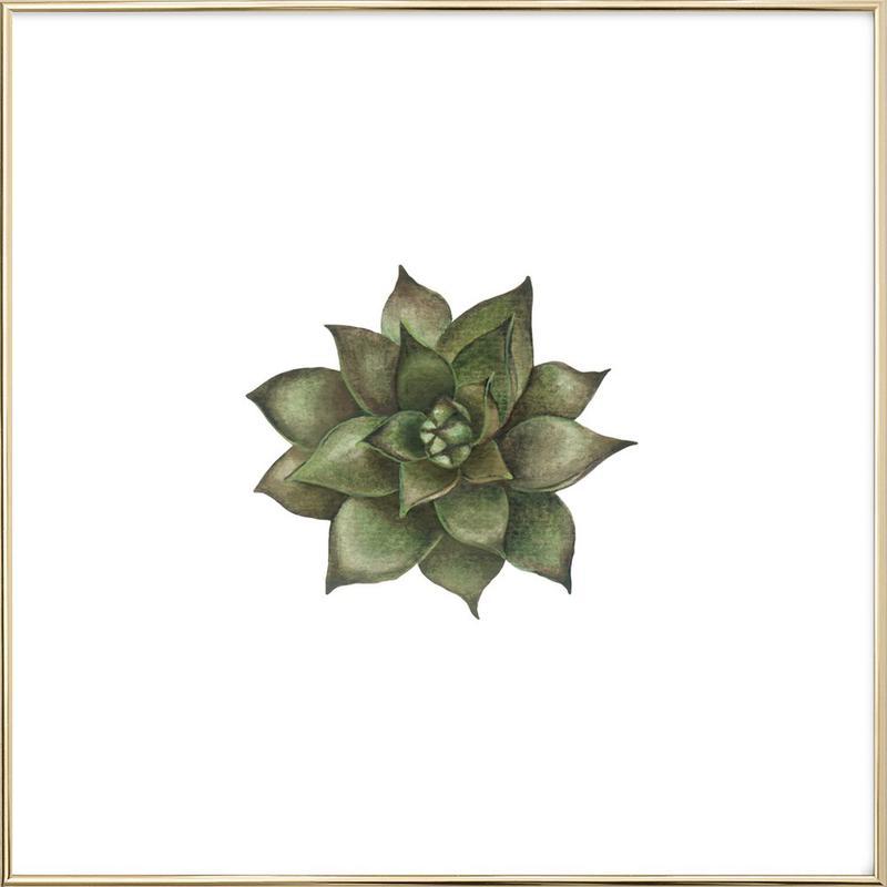 Cornflower 1 Poster in Aluminium Frame
