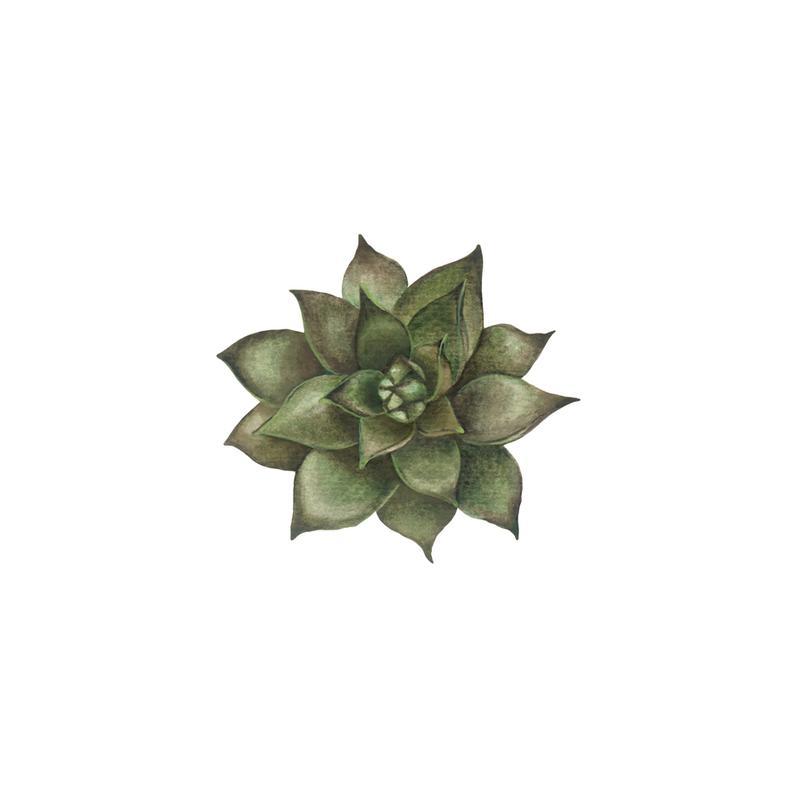 Cornflower 1 Acrylic Print