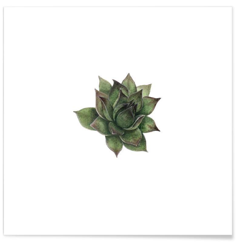Bladeren en planten, Succulent 2 poster