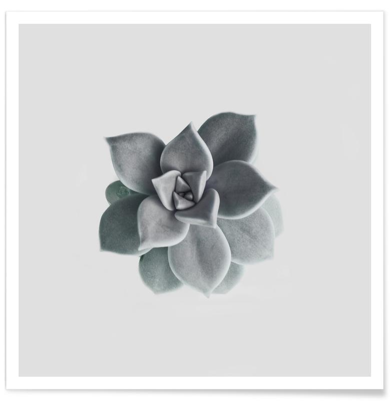 Noir & blanc, Feuilles & Plantes, Succulent affiche