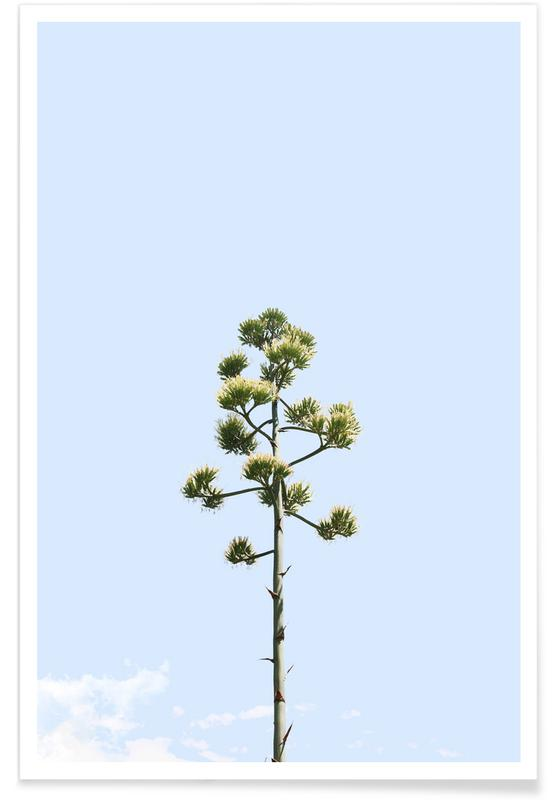 , Agave Americana Flower Poster