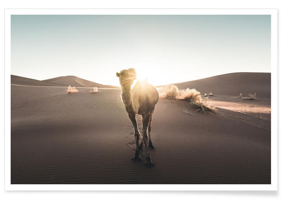 Woestijn, Reizen, Raw 20 Camel poster