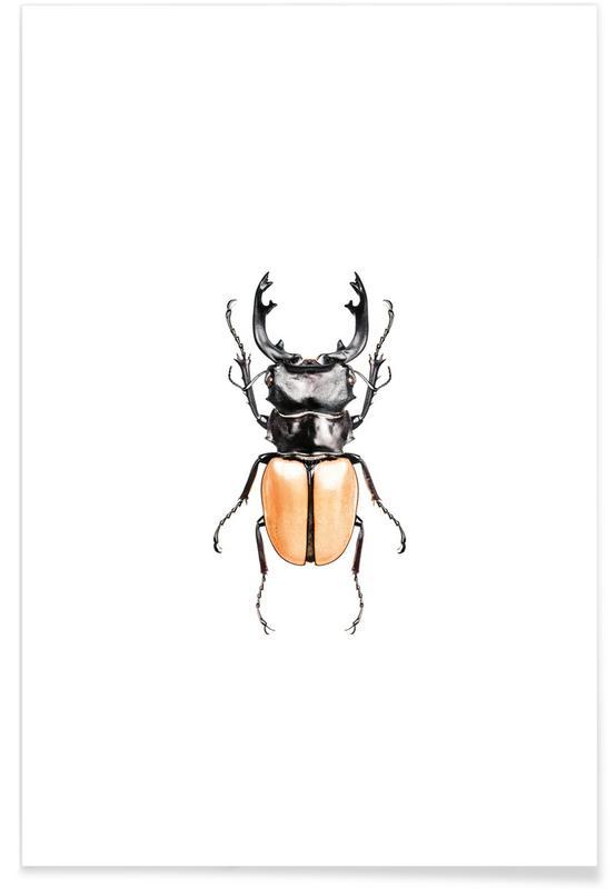 Käfer, Odontolabis Mouhotil Elegans -Poster