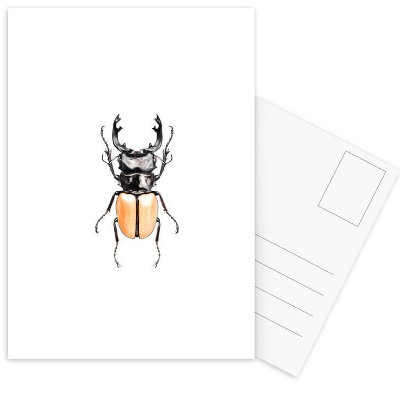 Odontolabis Mouhotil Elegans -Postkartenset