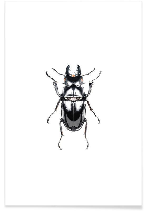 Biller, Odontolabis Siva Plakat