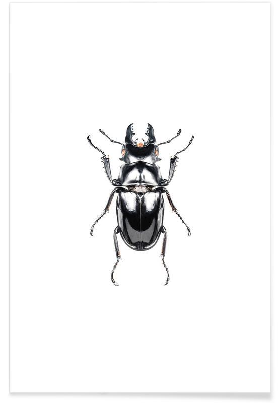 Käfer, Odontolabis Siva -Poster