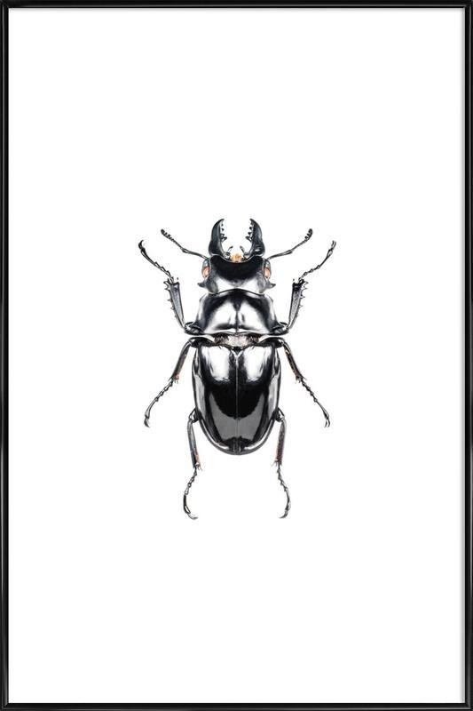 Odontolabis Siva -Bild mit Kunststoffrahmen