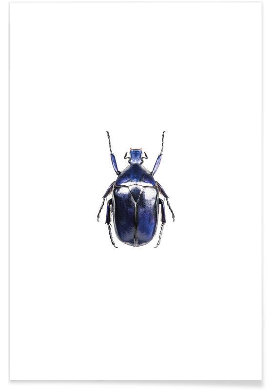 Käfer, Torynorrhina Flammea -Poster