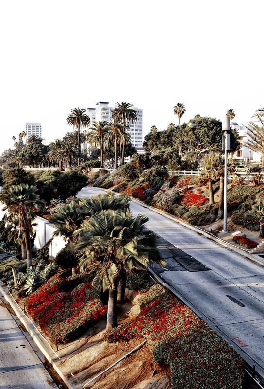 Santa Monica Red -Alubild