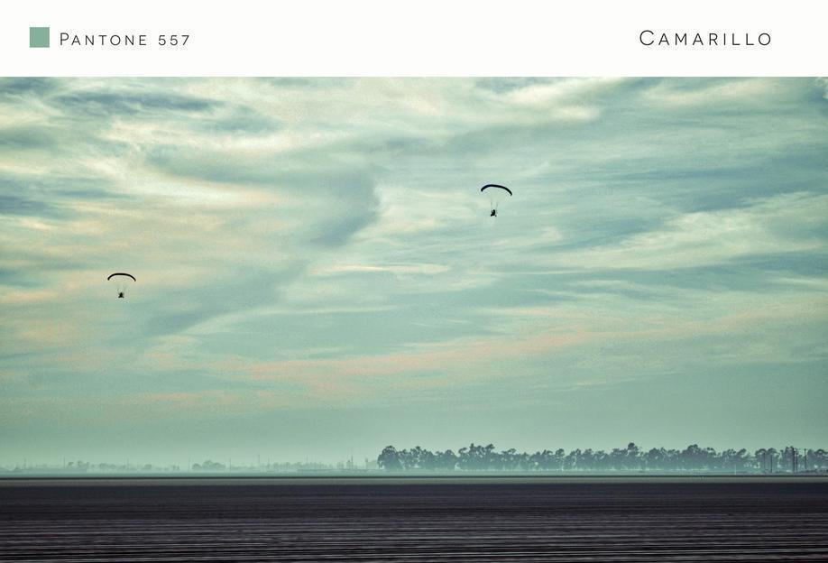 Camarillo Pantone 557 Aluminium Print