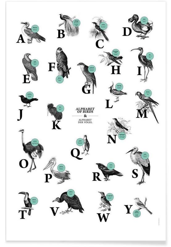 alphabet of birds, animal ABC Poster